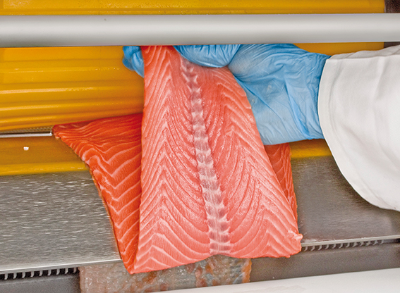 Economical Salmon Processing By MAJA Patented Deep-Skinning System